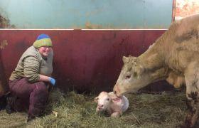 Marianne Louise Lunåsmo i fjøset med en nyfødt kalv.