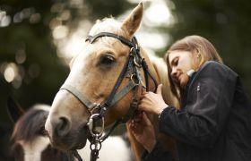 Jente klapper hest