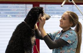 Dyrepleier undersøker hund