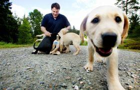 Hundeskolen Veiviseren i Vestby trener førerhunder og servicehunder.