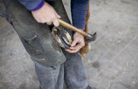 Hovslager skor hest