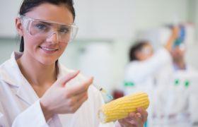 Matteknolog injiserer en maiskolbe på et laboratorium.