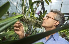 Planteinspektør sjekker plante