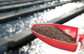 Spade med fiskefôr holdes fram for å kastes ut i merden med fisk.