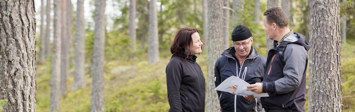 Tre skogsarbeidere ser på et kart i skogen